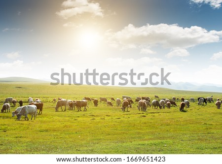 Cows of all colors grazing on the grassland under the blue sky and white clouds Сток-фото ©
