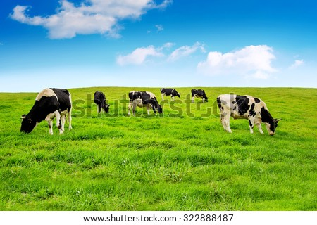 Cows on a green field. #322888487