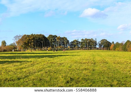 Cows on a meadow in Eastfrisia #558406888