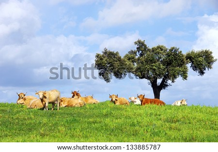 Cows on green field