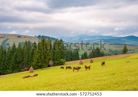 cows on green meadow, with mountains and clouds in background. #572752453