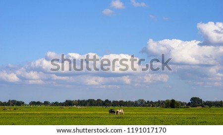 Cows on the green field under the clouds and blue sky with the city contours in the background #1191017170