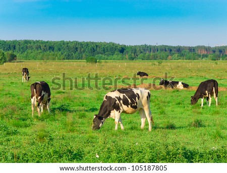 Cows Producing Milk On a meadow - stock photo