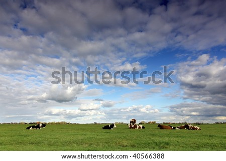 cows resting in a green meadow
