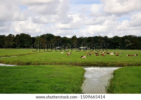 cows ruminate in the meadow #1509665414