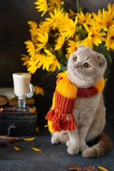 Cozy autumn. Cute kitten wearing knitted scarf sitting near yellow flowers bouquet, latte, pumpkins and open book. Happy Thanksgiving. Autumn mood. Greeting card, poster, coffee shop concept. Vertical