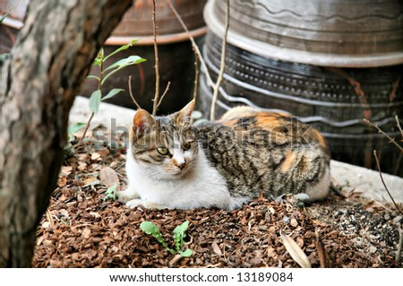 Cozy Cat Nestled Among Kimchi and Bean Curd Vats