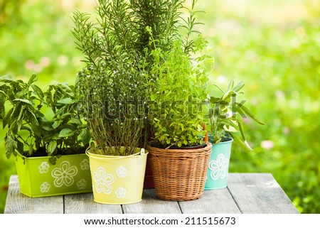 Cozy home garden with herbs - rosemary, sage, basil, thyme and oregano