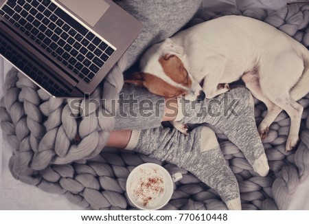 Cozy home, warm blanket, hot drink, movie night. Dog sleeping on female feet. Relax, carefree, comfort lifestyle. #770610448