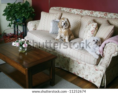 cozy living room with dogs sitting on couch