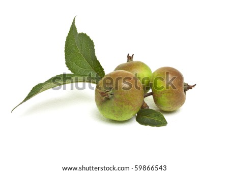 Crab Apples from low perspective isolated against white.