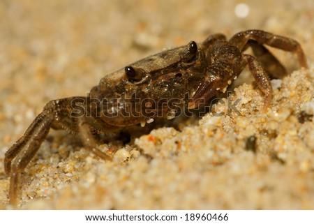 crab close up #18960466