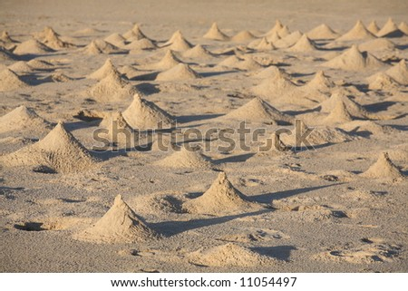 "Crab ""homes"" on the beach"