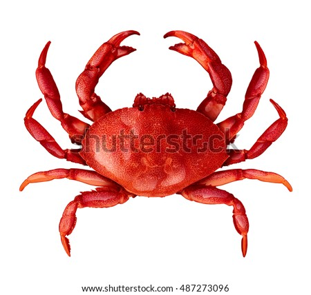 Crab isolated on a white background as fresh seafood or shellfish food concept as a complete red shell crustacean in an overhead view isolated on a white background.