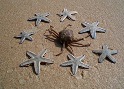 Crab on a sand and starfishes around