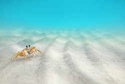 Crab on the sandy bottom