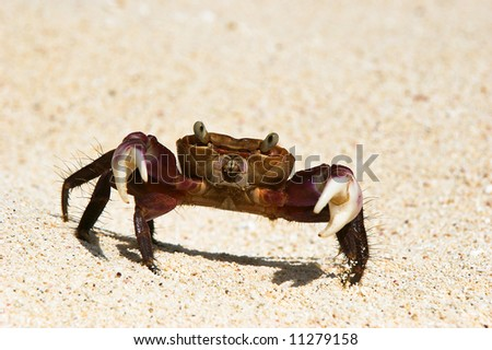 Crab portrait