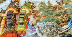 Crab Seafood Mix Frozen Ice. fish Market Background blue crabs.