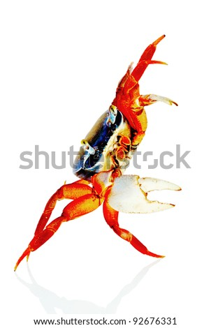 Crab. White background. Isolated. With shade.