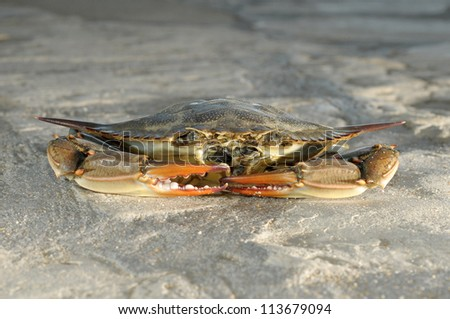 crabs,beach