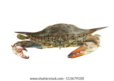 crabs,beach - stock photo