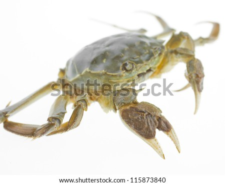 Crabs isolated on a white background