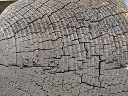 Cracked black wood with tree age rings