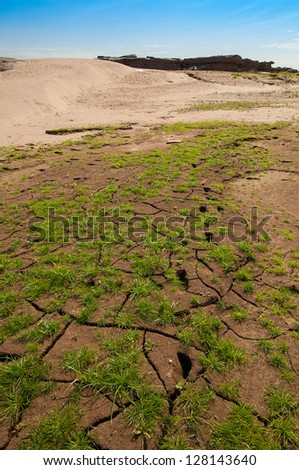 Cracked Earth and green grass. Dried Ground