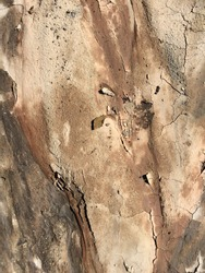 cracked earth background, textured cracks. clay dry earth.