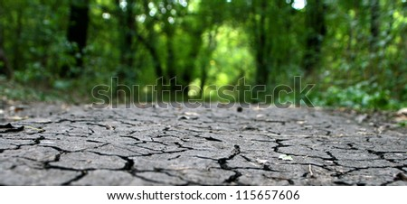 cracked earth in the background of the forest thicket