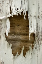 Cracked Layer On Old Plywood Door With White Paint