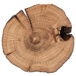 Cracked oak split isolated