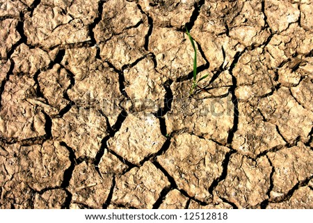 Cracked soil and plant fighting against extreme conditions.