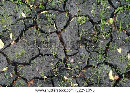 Cracked wet ground and new grass blades