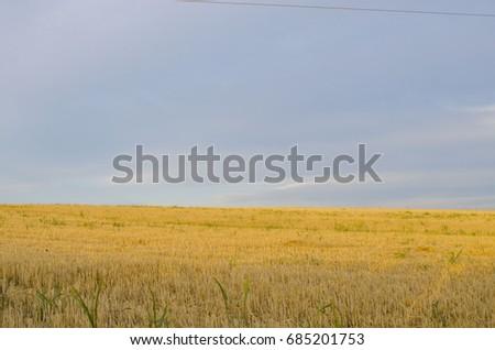Cracked wheat field #685201753