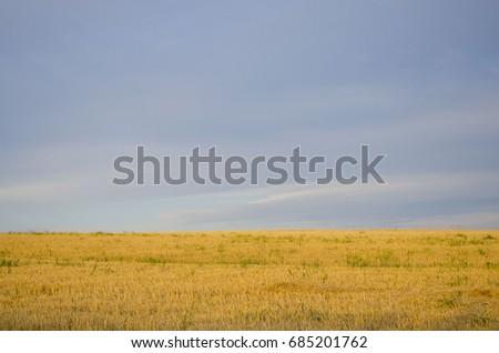 Cracked wheat field #685201762