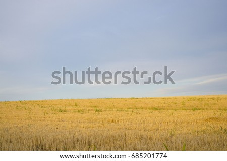 Cracked wheat field #685201774