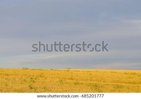 Cracked wheat field #685201777
