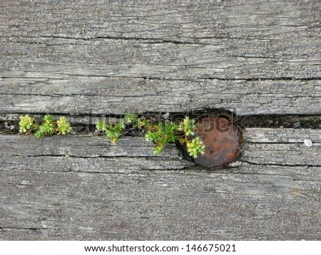 Cracked wooden texture with weeds growing for use as background