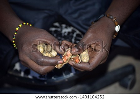 cracking groundnuts with hands young african man cracking groundnuts traditionally