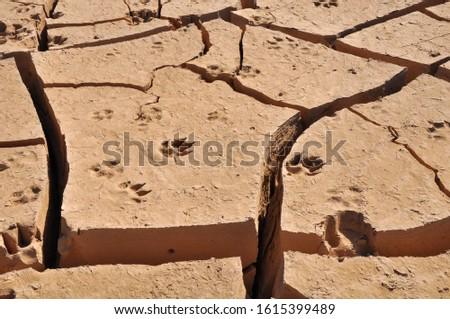 Cracks on dry ground. Footprints on the ground. Wilderness, Egypt.