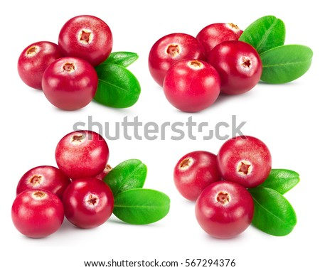 Shutterstock cranberries collection isolated on white Clipping Path