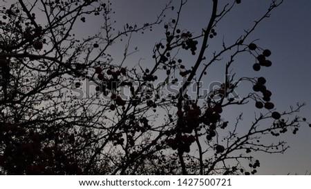 Cranberries on an autumn's dusk sky. #1427500721