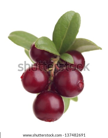 cranberry on white background