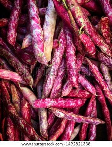 Cranberry Shelling Beans Farmers Market