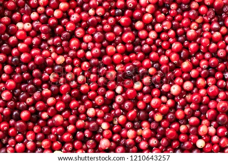 Cranberry, wild forest marsh red berries background texture, closeup, macro