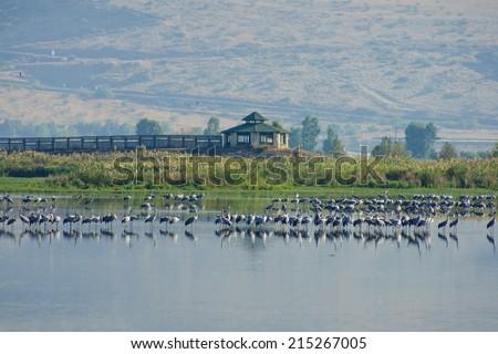 Crane birds and bird observation station, in Agamon Hula bird refuge, Hula Valley, Israel