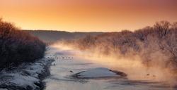 Crane Hokkaido, Kushiro Marsh National Park
