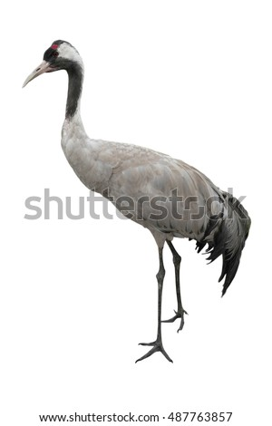 Shutterstock crane is isolated on a white background