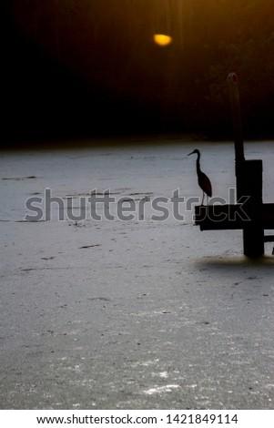 crane silhouette ON SWAMP LAKE FLORIDA SUNRISE
